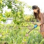 Woman hoeing her vegetable garden — Stock Photo