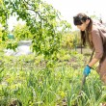 Woman working in her vegetable garden — Stock Photo