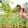 Mother and son in the vegetable garden — Stock Photo #25364831