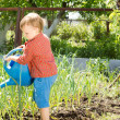 Little boy watering the onion plants — Stock Photo