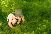 Attentif jeune garçon petit découverte de la nature — Photo