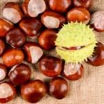 Autumn chestnuts — Stock Photo
