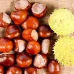 Fresh edible sweet chestnuts — Stock Photo #32079509
