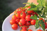 Tomatoes cherry on a plate — Stock Photo