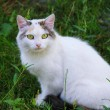 Cat in the green grass - Stock Photo