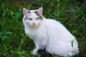 Cat in the green grass — Stock Photo