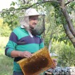 Stock Photo: Work of beekeeper