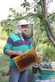 Work of the beekeeper — Stock Photo