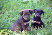 Two cute puppies — Stock Photo