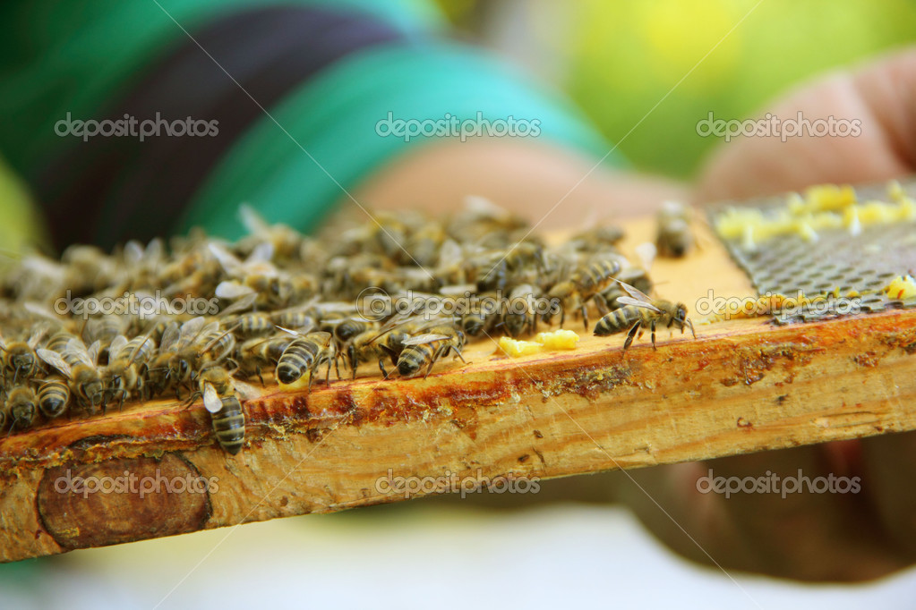 Bees on honeycells — Stockfoto #12465652