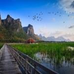 Wooden Bridge in lotus lake at khao samroiyod national park, tha — Stock Photo #24056499