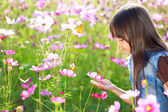 Little asian girl in flower fields — Foto de Stock