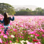 Little asian girl standing in flower fields — Stock Photo #39070013