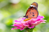Closeup butterfly on flower — Stock Photo