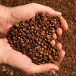Heart of cofee grains in hollow the hand - Stock Photo