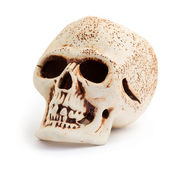 Human skull isolated on a white background. — Stock Photo