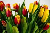 Many tulips closeup — Stock Photo