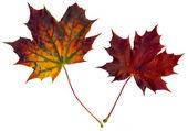 Autumnal beauty — Stock Photo