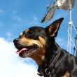 Adventure ship and dog - Stock Photo