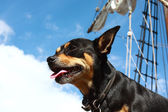 Adventure ship and dog — Stock Photo