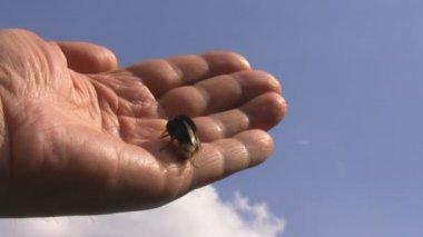 Hand, blå himmel och humlan crawla. frihet — Stockvideo