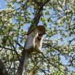 Bird getting into nesting box — Stock Photo #25870497