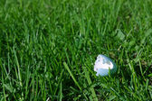 Wild bird's eggshell on grass — Stock Photo