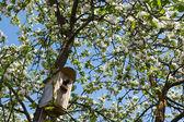 Bird starling at home — Stock Photo