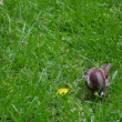 Sparrow picking crumbs from grass — Stock Video