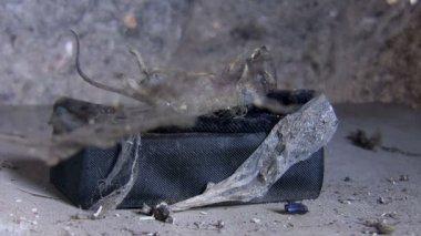 Mummified animal corpse in its tomb — Stock Video