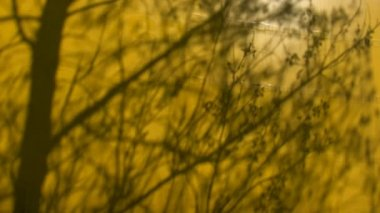 Tree shadow on yellow background — Stock Video