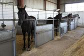 Estable con caballos — Foto de Stock