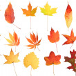 Autumn Leaf Collage — Stock Photo