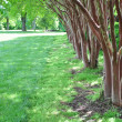 Garden Tree Border — Stock Photo
