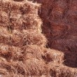 Pine Straw Mulch — Stock Photo