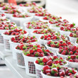 Strawberry baskets — Stock Photo #12576247