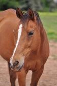 Friendly Horse — Stock Photo