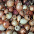 Onion Bulbs — Stock Photo
