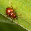 Постер, плакат: Red bug on the leaf