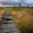Broken walkway in a marsh in Estonia — Stock Photo