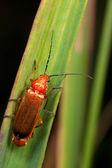 葉の上の赤のバグ — ストック写真