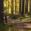 Bicycle left in forest to leon pinetree — Stock Photo #13449065