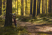 Bicycle left in forest to lean on pinetree — Stock Photo