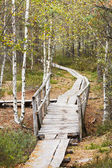 Wooden bridge in forest in autumn — Foto Stock