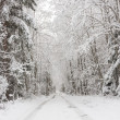 Snowy road in forest — Stock Photo