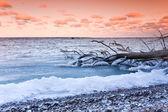 Fallen tree in sea at sunset — Stock Photo