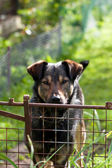 Dog behind metal railing — Stock Photo