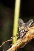 Gros plan d'une mouche — Photo