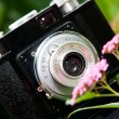 Classical SLR camera and flower - Stock Photo
