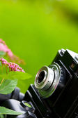Classical SLR camera and flower — Stock Photo